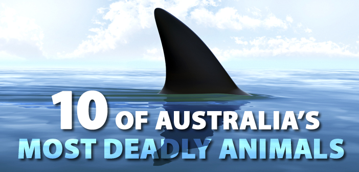 10 Of Australia S Most Deadly Animals Manspace Magazine
