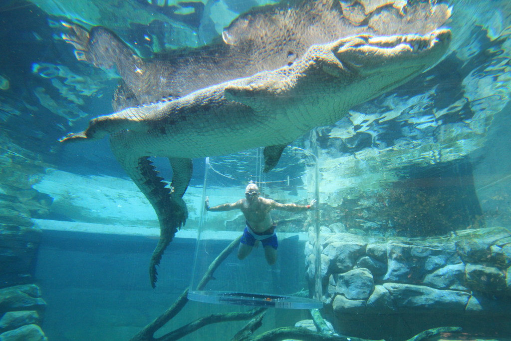 Swim With A Croc Manspace Magazine